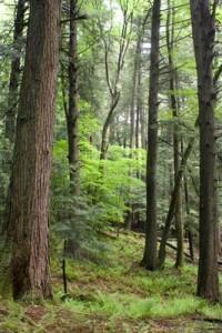 Bucks County's Tyler State Park